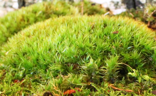 Какой грунт или мох можно купить для улитки